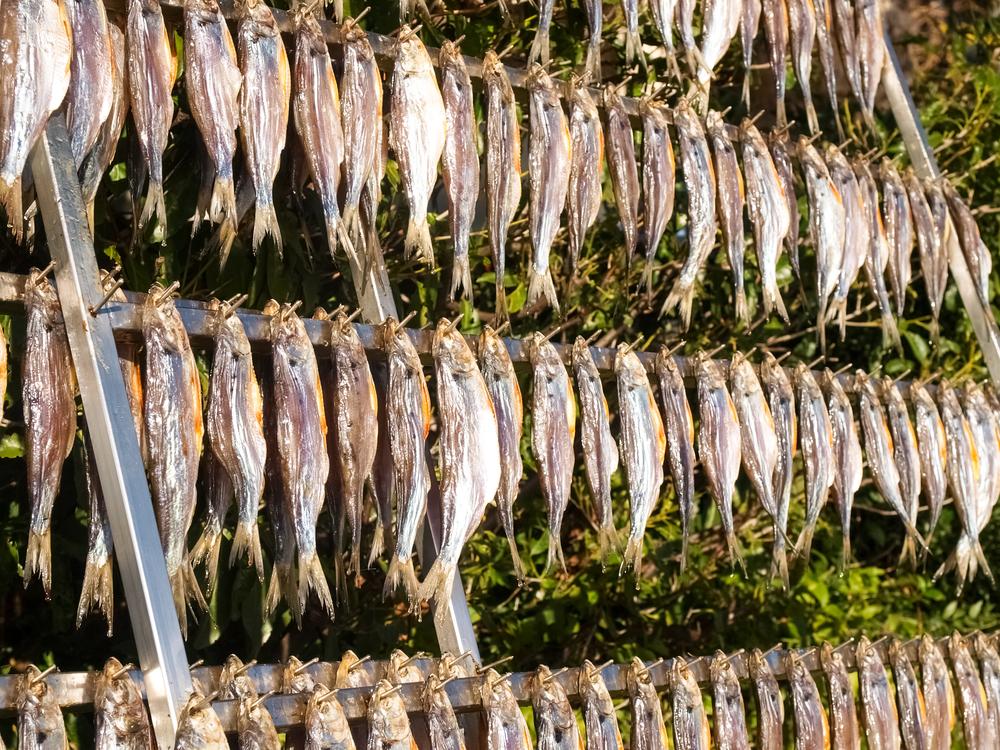 pesce nel sito di incontri barile New England dating
